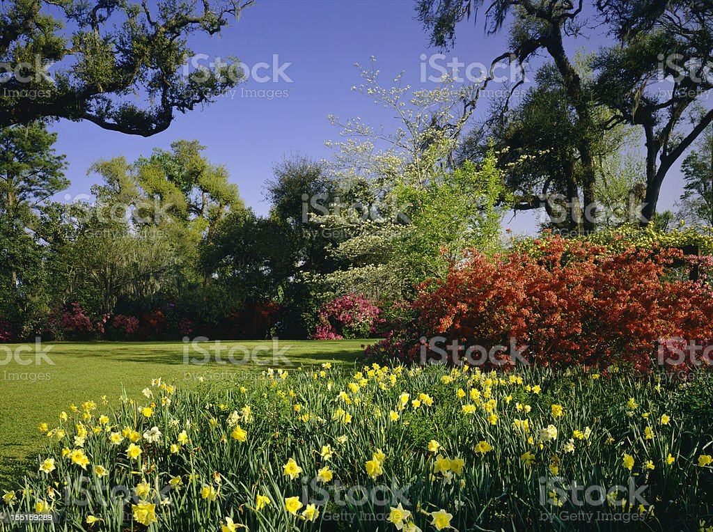 Southern Woodlands (P) stock photo