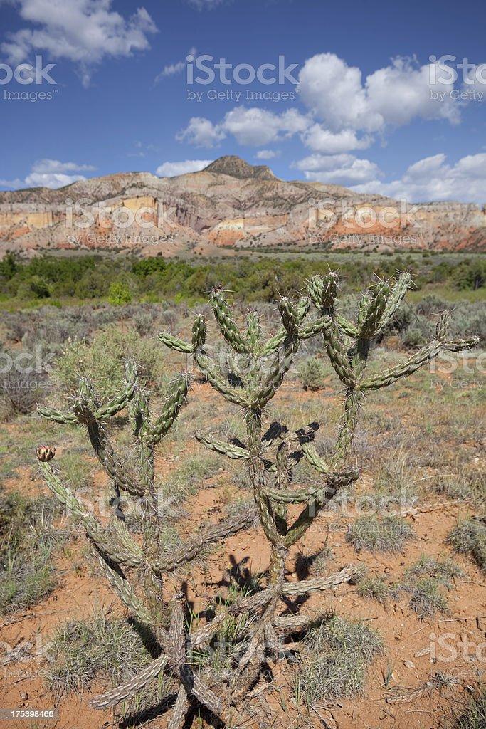 southwest badlands cactus landscape stock photo
