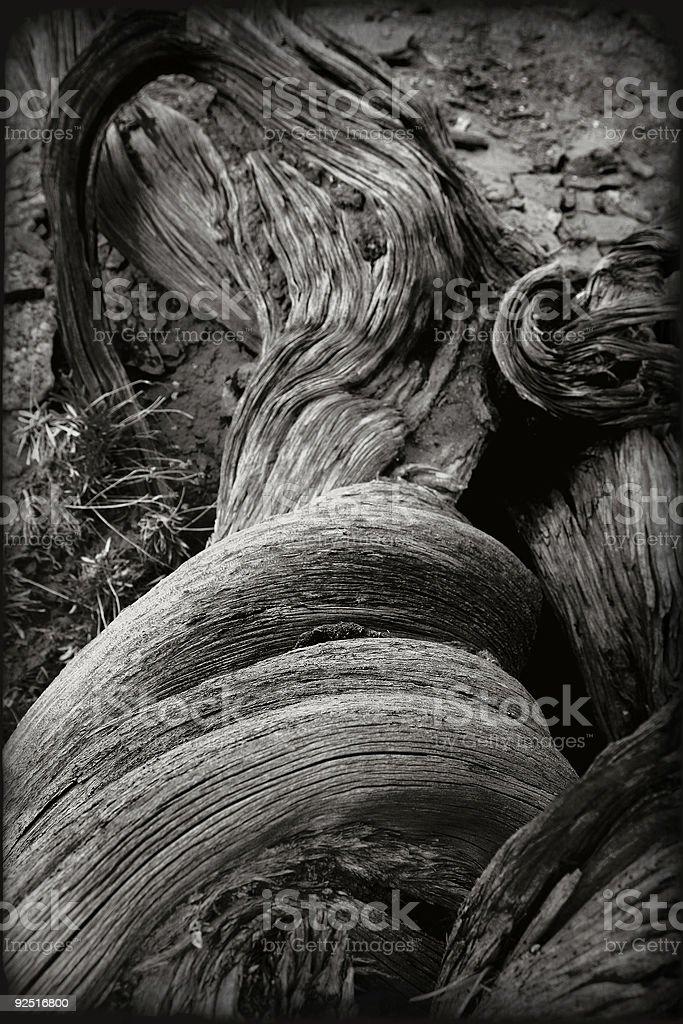 Southwest: Dead Wood Still Life royalty-free stock photo