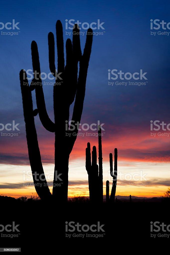 Southwest_Saguaro_Sunset stock photo