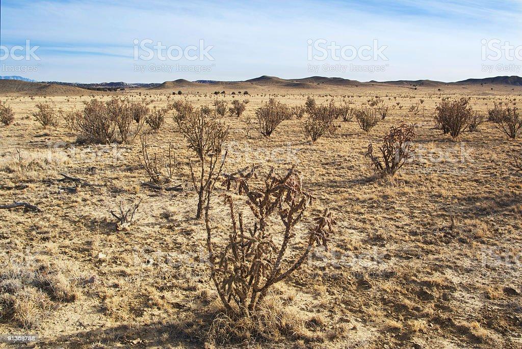 southwestern desert cactus landscape stock photo