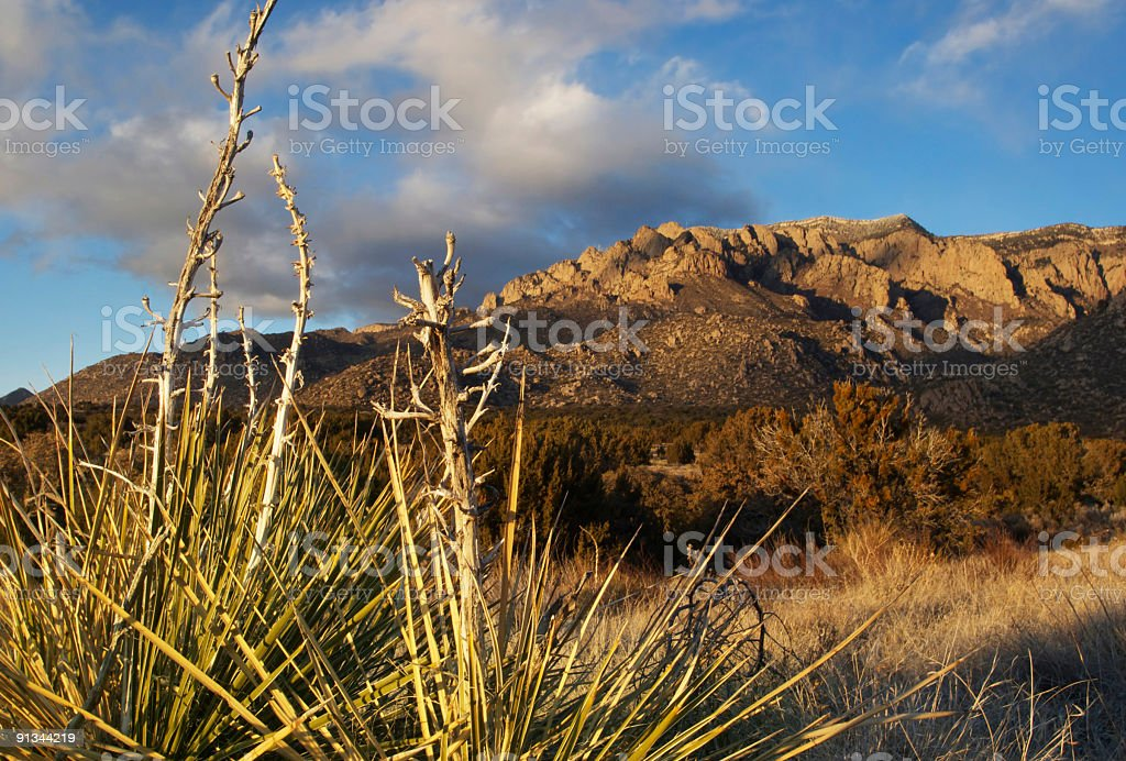 southwestern desert mountain sunset with yuccas stock photo
