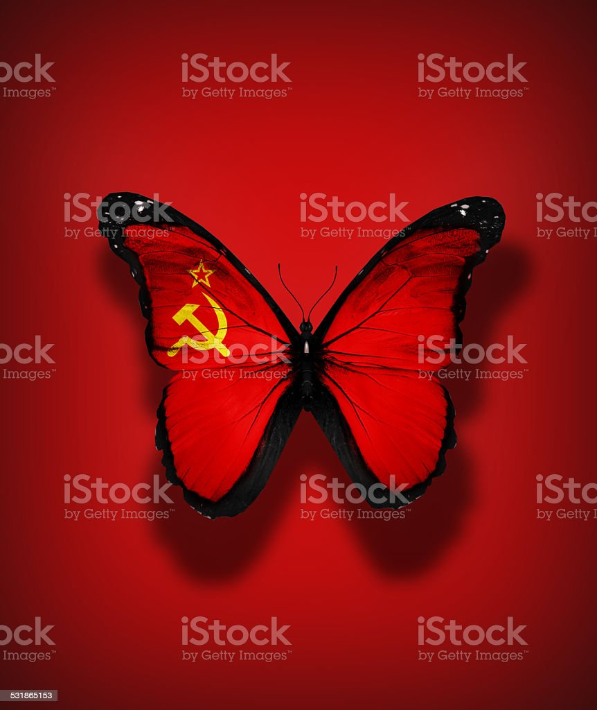 Soviet Union flag butterfly, isolated on flag background stock photo