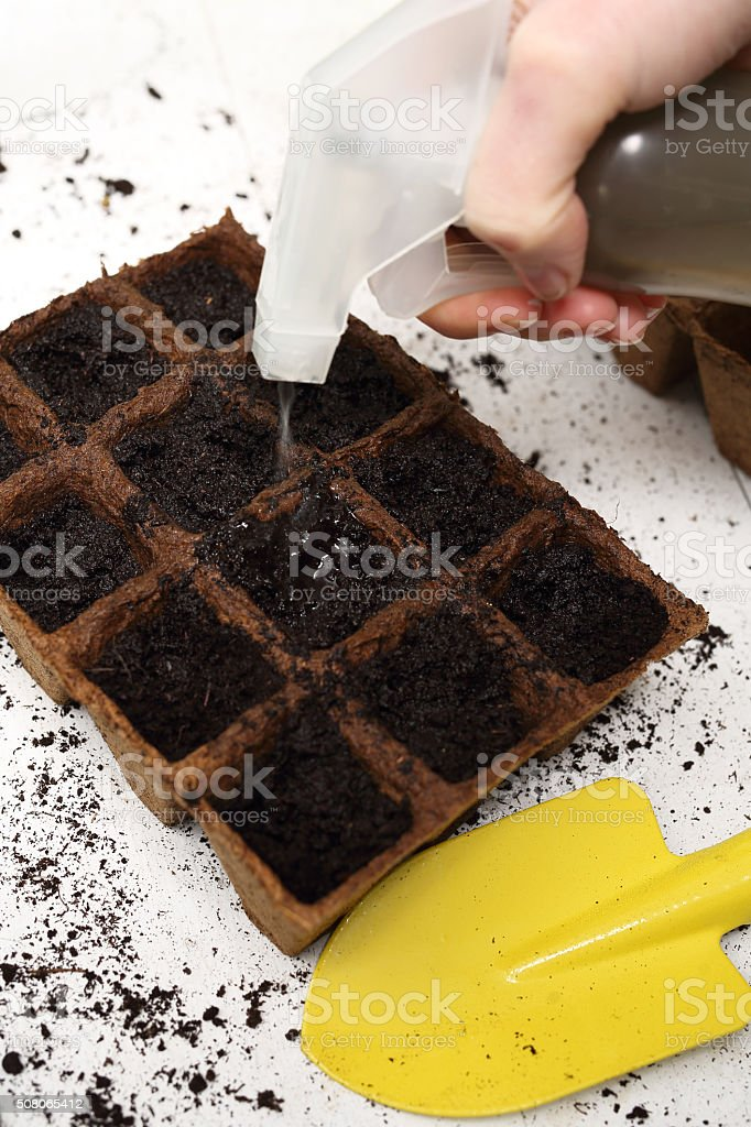 Sowing of crops in the home, peat pot stock photo