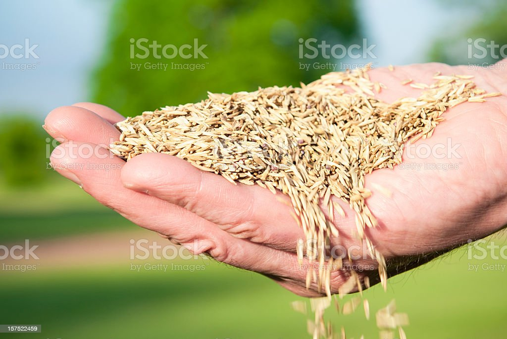 Sowing Seed By Hand stock photo