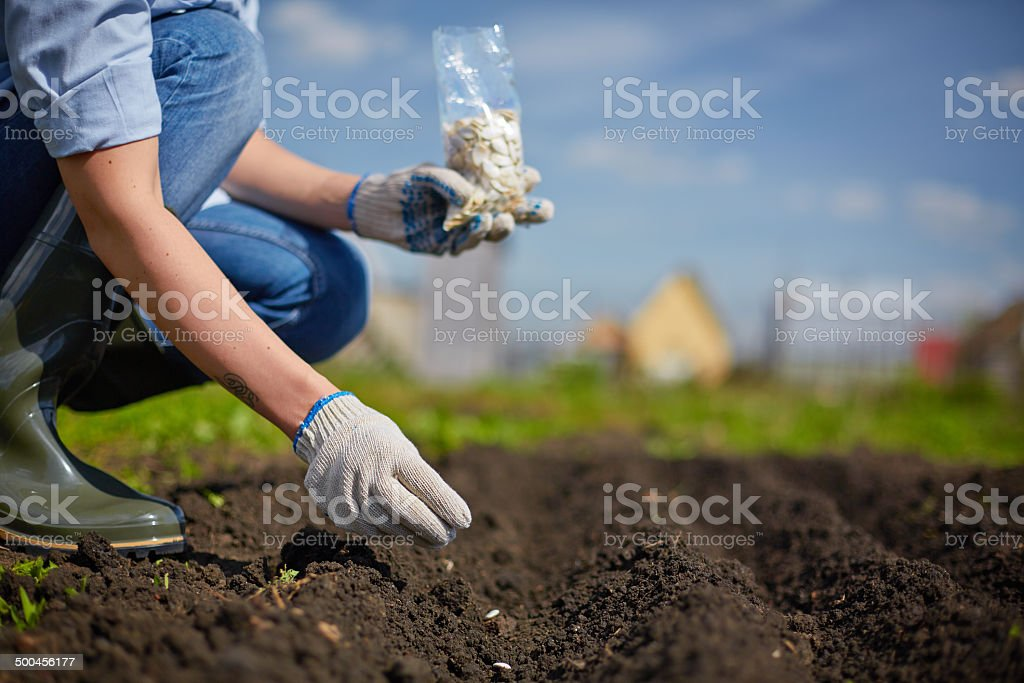 Sowing seed royalty-free stock photo