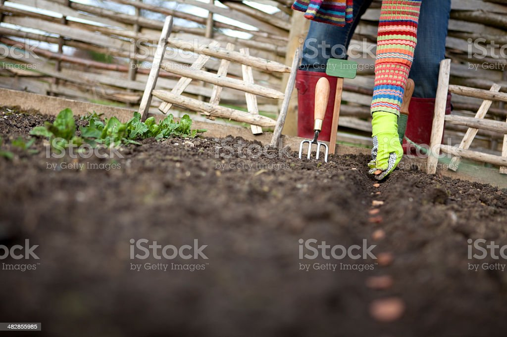 Sowing Seeds in the Veg Patch royalty-free stock photo