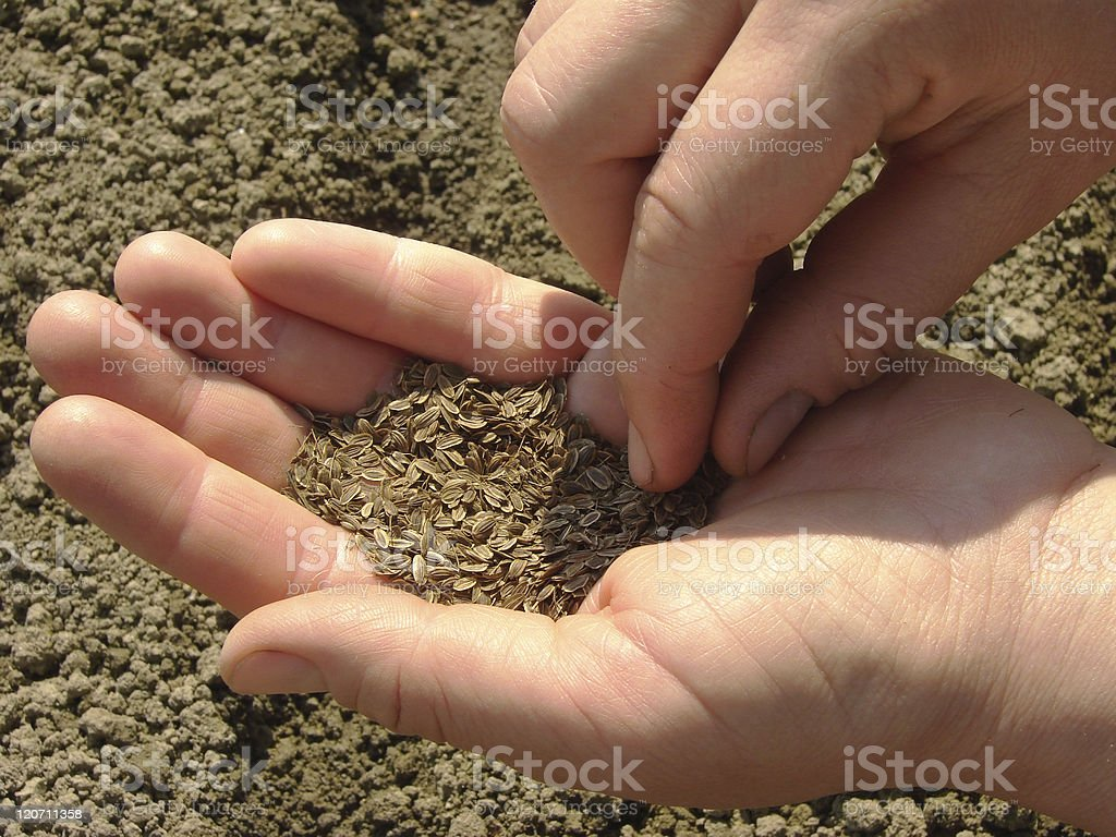 sowing seeds royalty-free stock photo