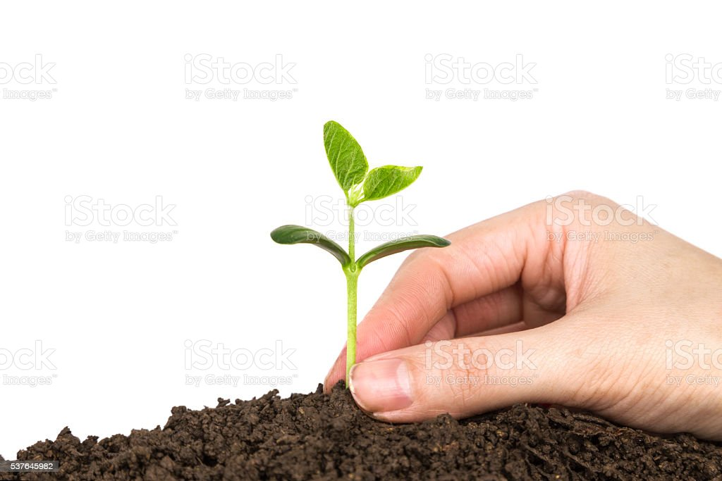 sowing:new life growing in dirt stock photo