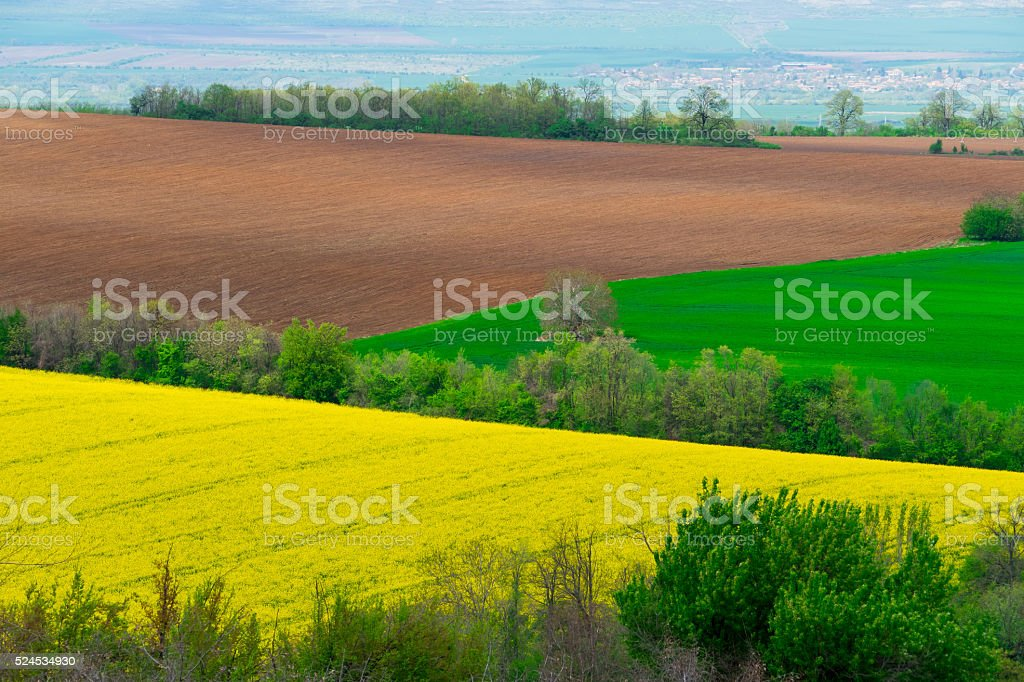 Sown and plowed farm field stock photo
