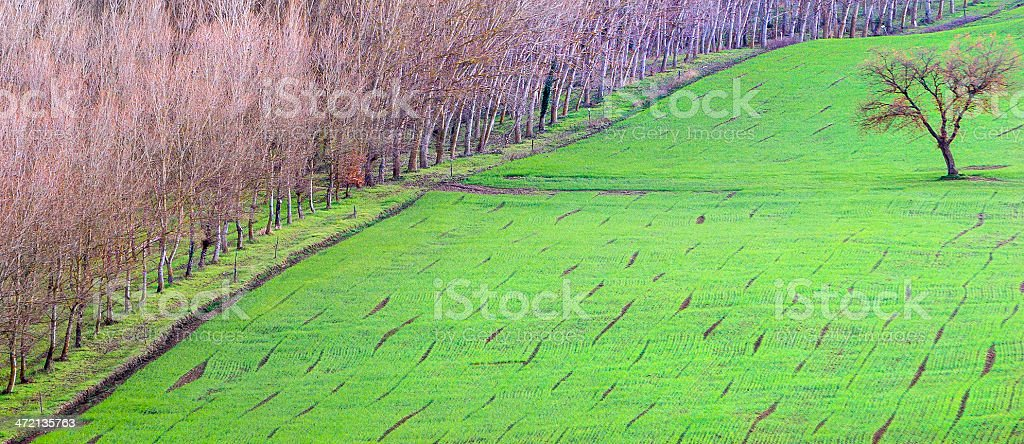 Sown field royalty-free stock photo
