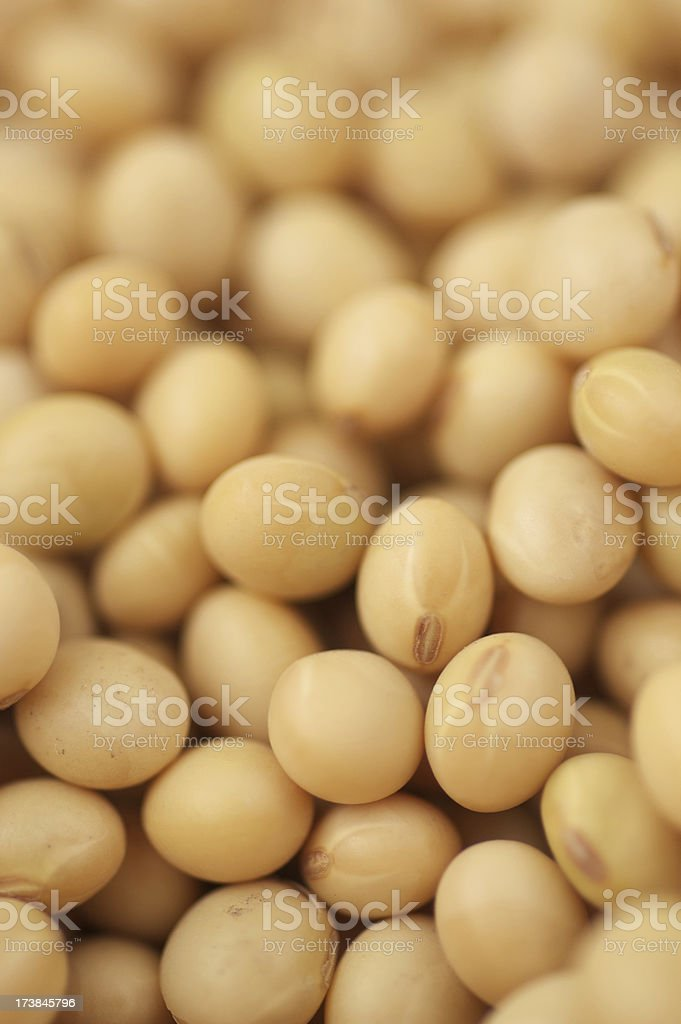 Soy beans close-up royalty-free stock photo