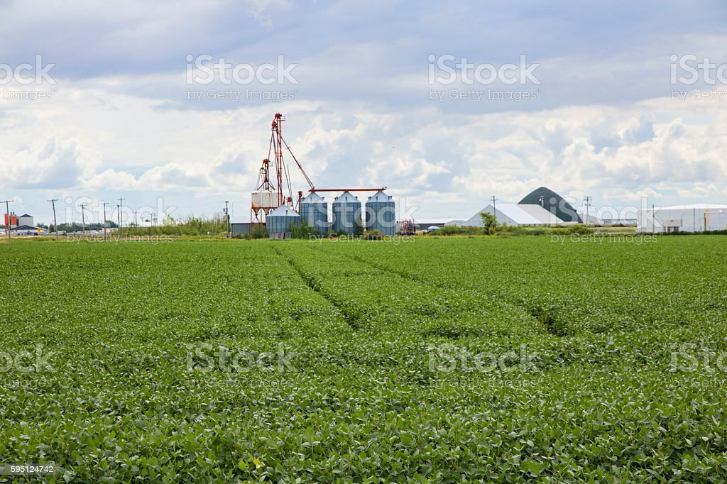 Soybean Crop and Grain Handling Facility on the Prairies stock photo