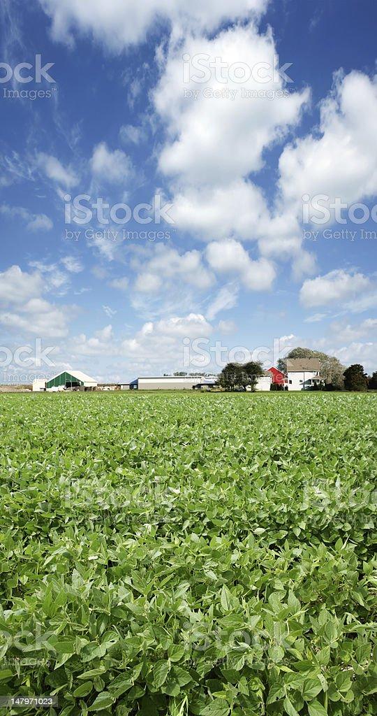 XXXL soybean farm stock photo