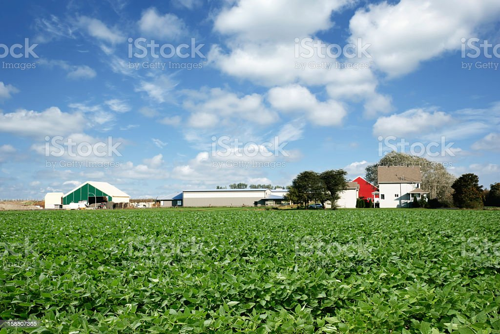 XXL soybean farm royalty-free stock photo