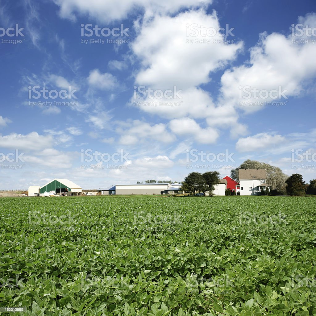 XXXL soybean farm royalty-free stock photo