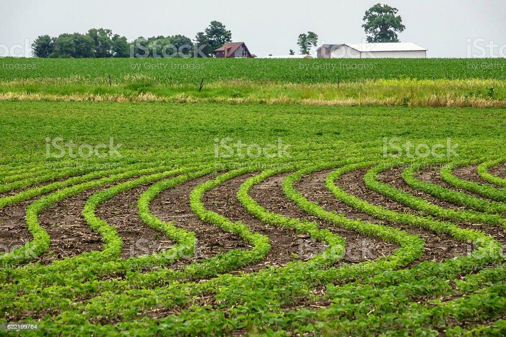 Soybean field in springtime stock photo