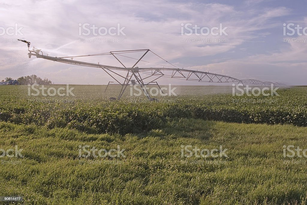 Soybean Field Irrigation royalty-free stock photo