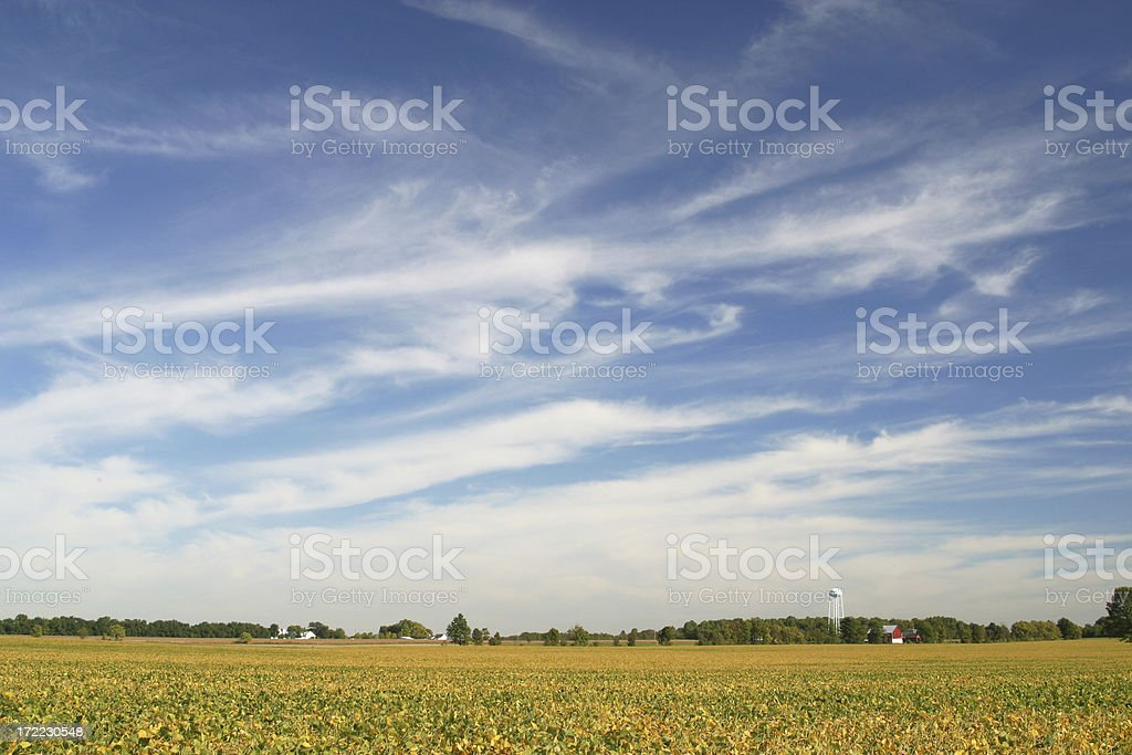 Soybean Field Under Cirrus Clouds stock photo
