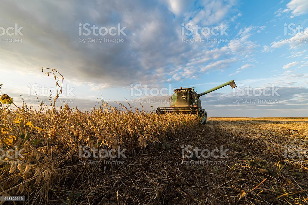 soybean harvest in autumn stock photo