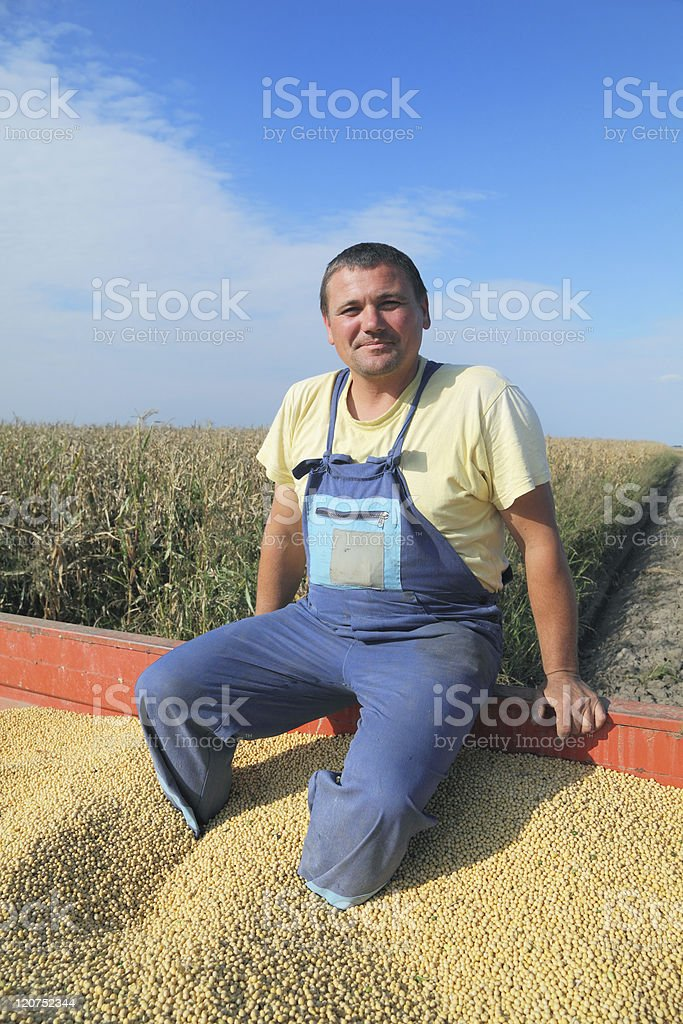 Soybean harvesting royalty-free stock photo