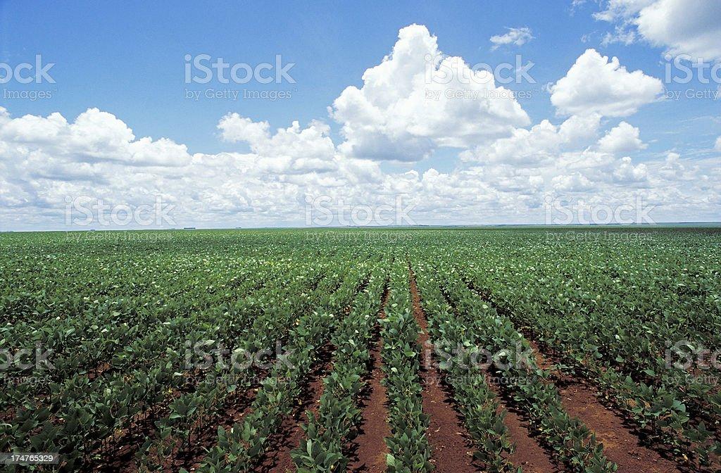 Soybean plantation in  cerrado area, Mato Grosso, Brazil stock photo