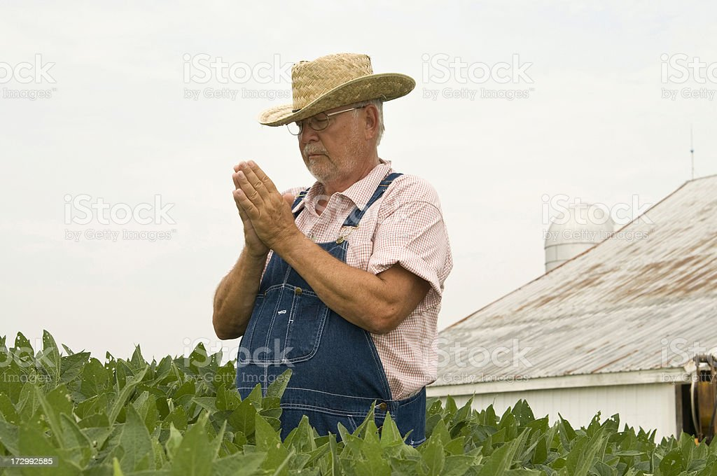 Soybean Prayer royalty-free stock photo