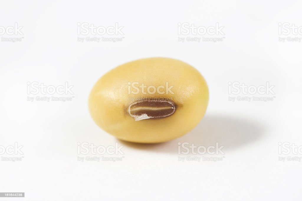 soybean seed isolated on white background royalty-free stock photo