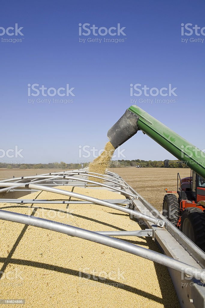 Soybeans Being Offloaded from Grain Cart to Semi Trailer stock photo
