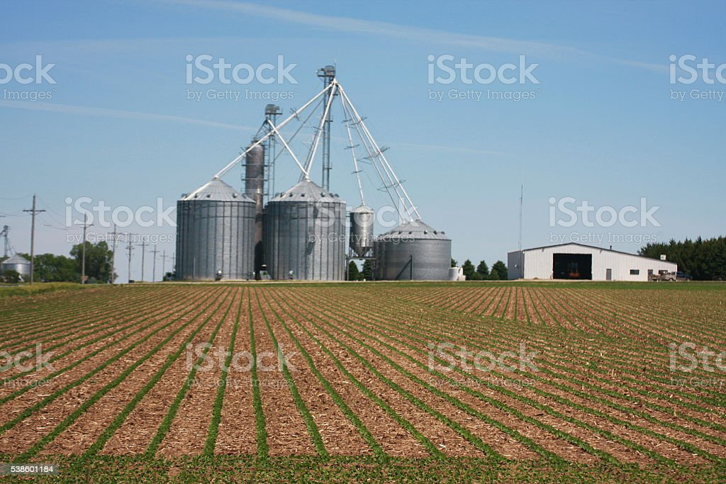 Soybeans Emerge by Grain Bins in Nebraska stock photo
