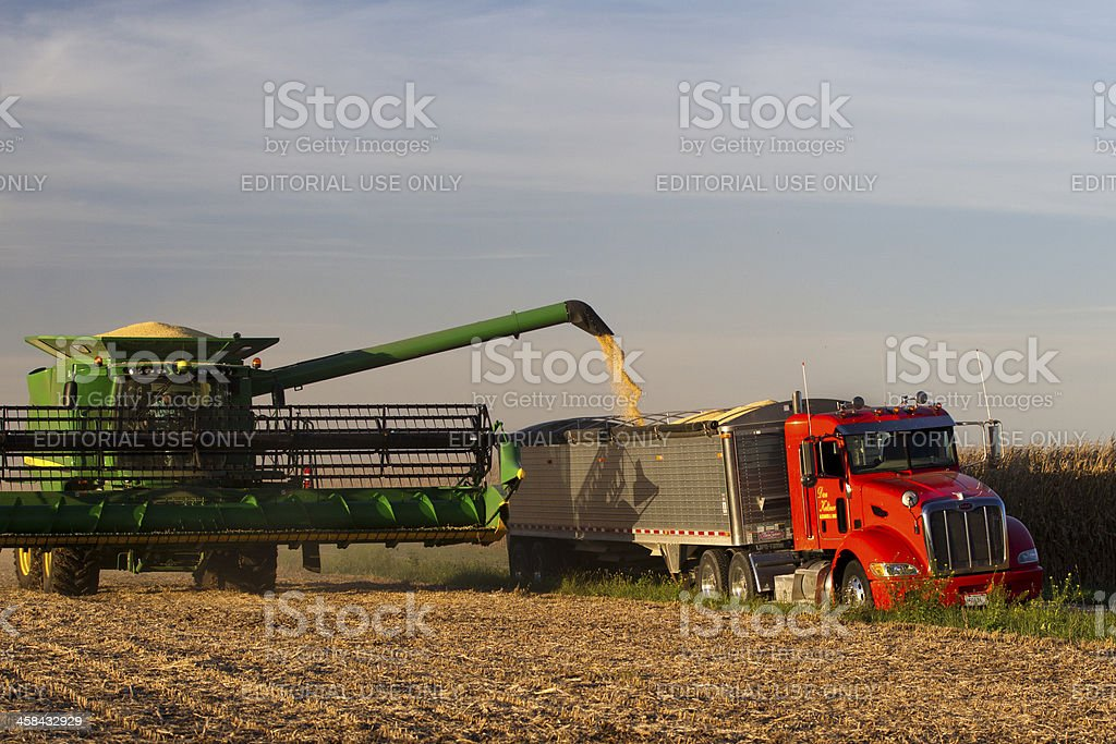 Soybeans headed from field to market royalty-free stock photo