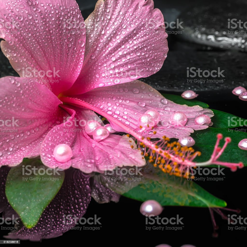 spa concept of pink hibiscus flower on green leaf stock photo