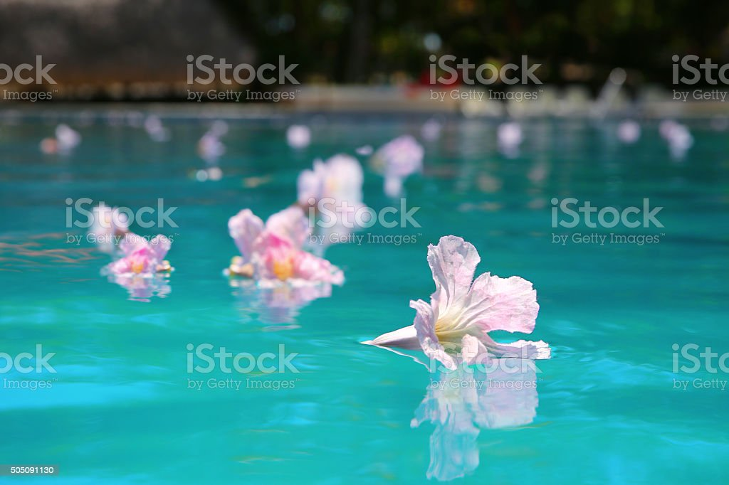 Spa Pool with Floating Flowers at Dusk stock photo