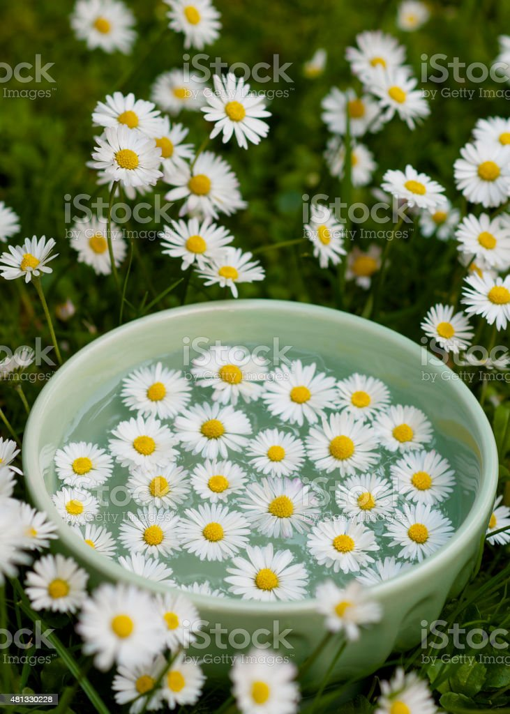 Spa setting with fresh daisy flowers in water. stock photo