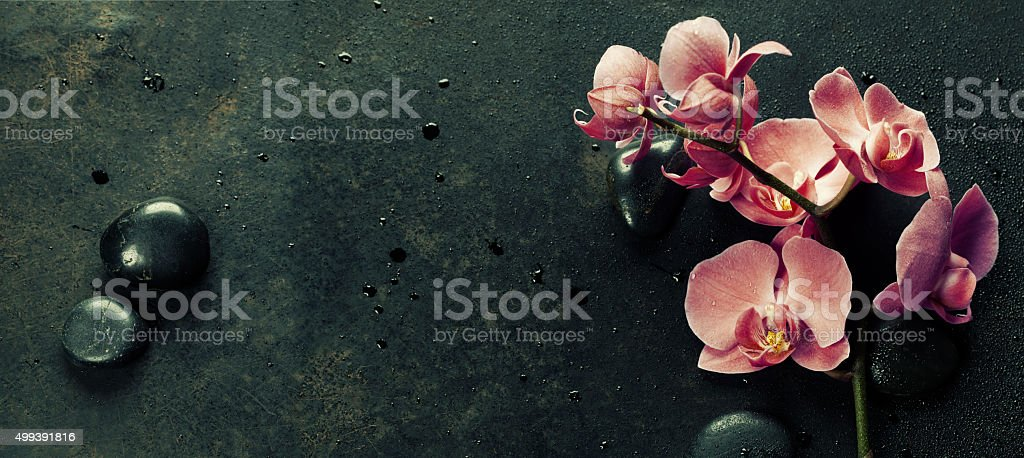 Spa stones and pink orchid on the dark background stock photo