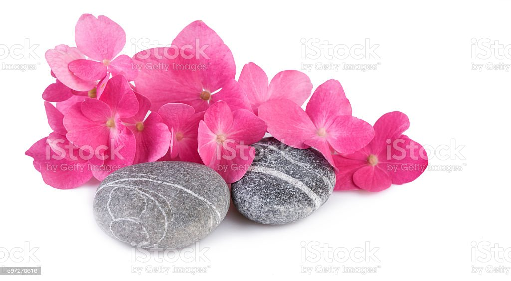 Spa stones with pink flowers on white background stock photo