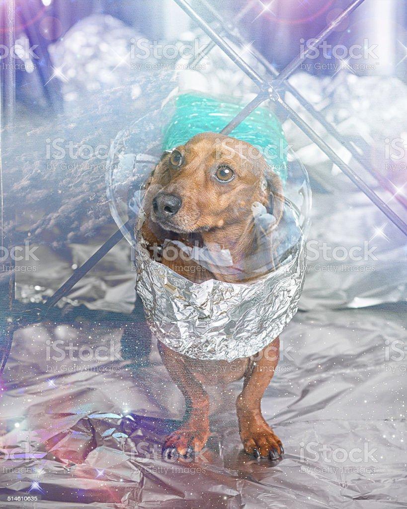 Space dog stock photo