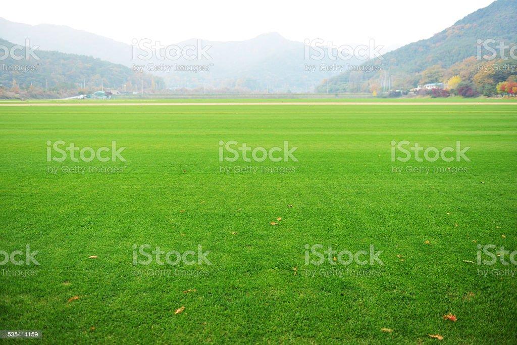 Spacious Green grass field stock photo