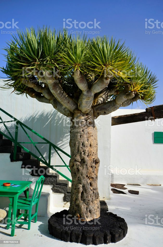 Spain, Canary Island stock photo