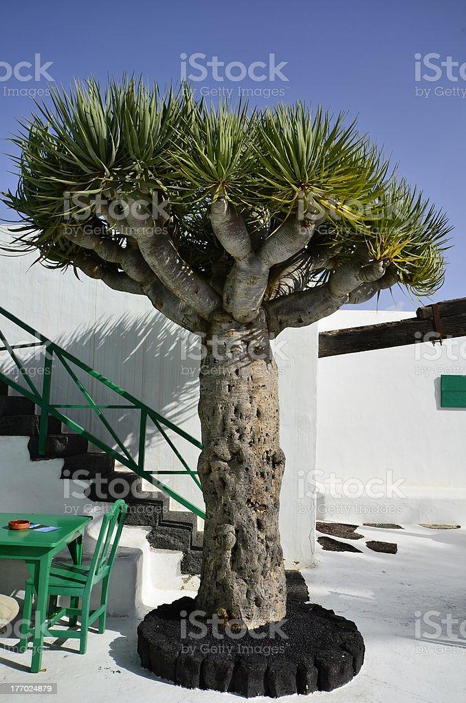 Spain, Canary, Lanzarote Island stock photo