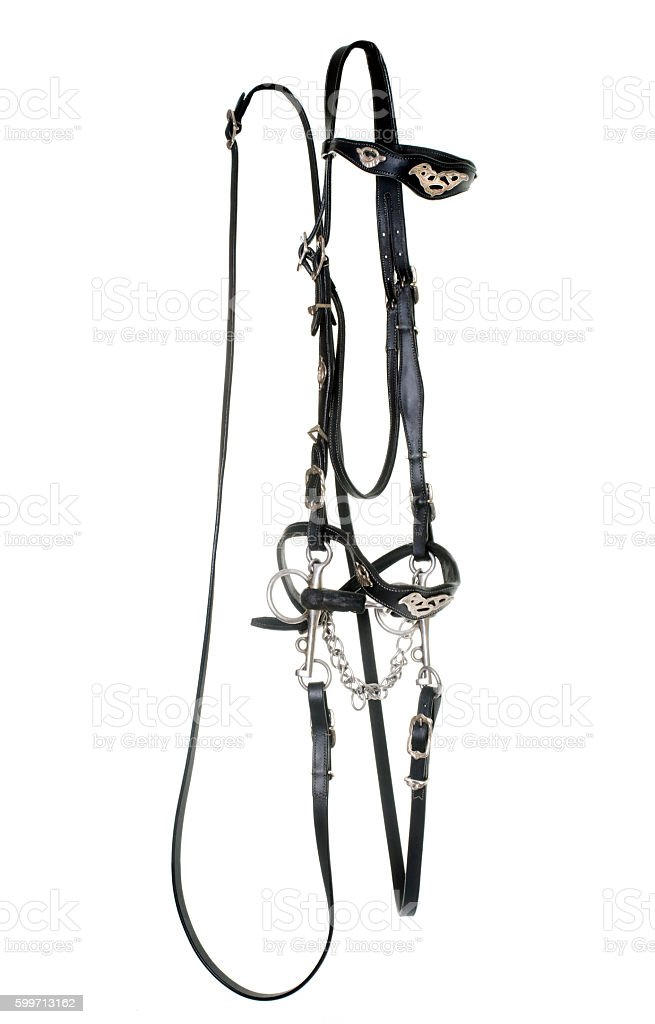 spanish bridle for horse stock photo