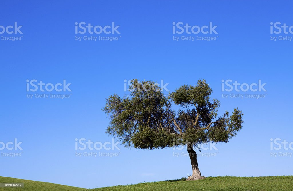Spanish countryside and winding road royalty-free stock photo