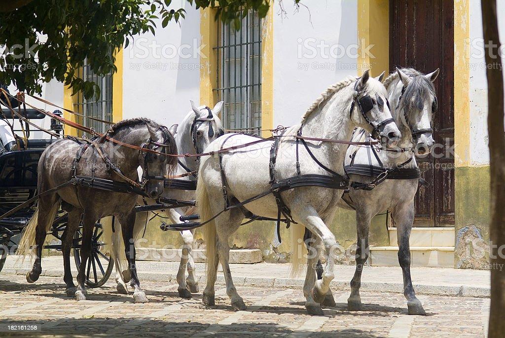 spanish horses royalty-free stock photo