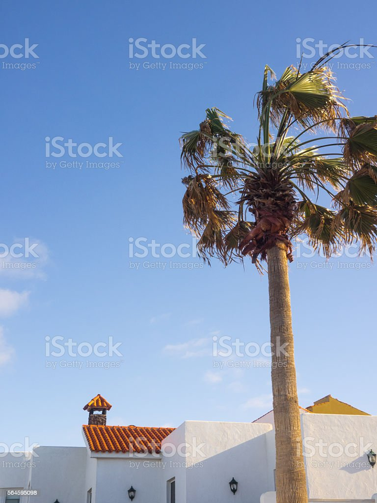 Spanish houses and palm tree in summer stock photo
