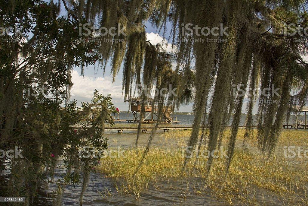 Spanish Moss at Lake June, FL stock photo