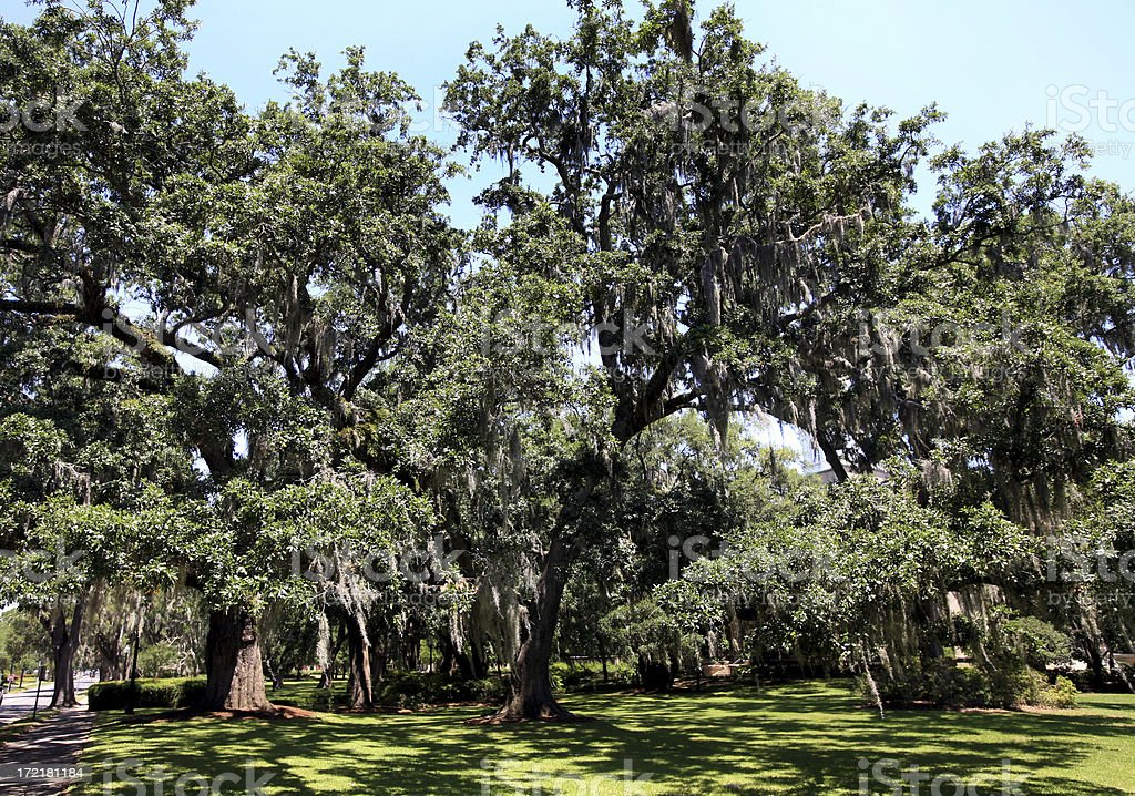 Spanish Moss on Live Oak Trees Southern Mansion royalty-free stock photo
