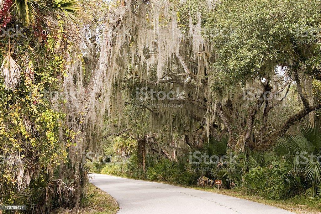 Spanish Moss Pathway royalty-free stock photo