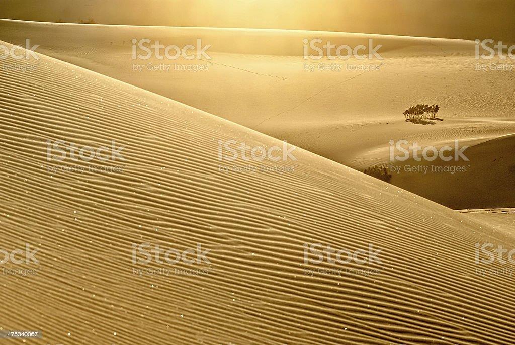 Sparkling Desert Dunes stock photo
