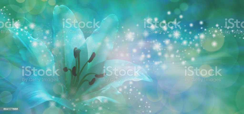 Sparkling Lilly Banner stock photo