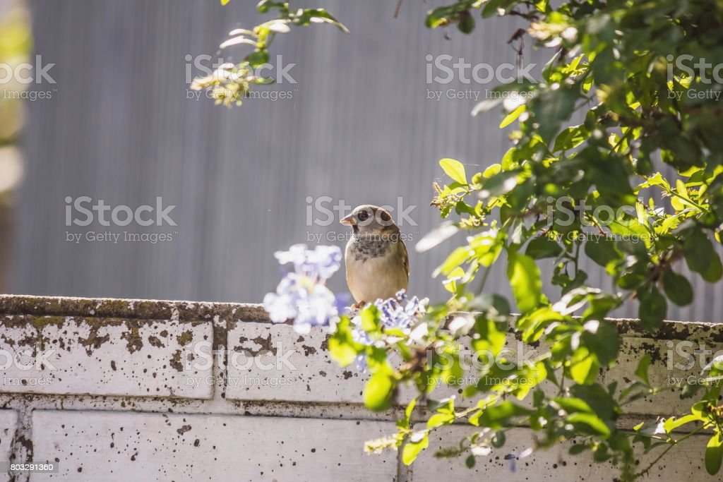 Sparrow among green leaves and flowers stock photo
